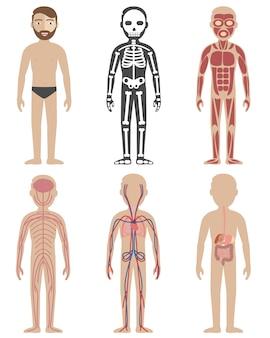 Diseños de anatomía humana