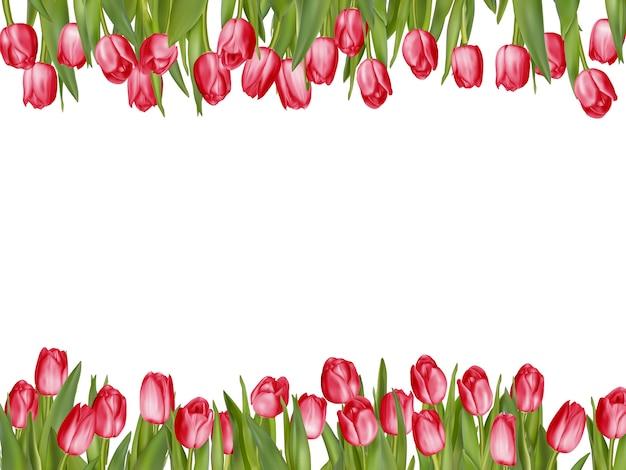 Disposición de marco de tulipán aislado.