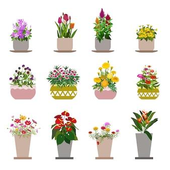 Diversas flores en macetas, aisladas sobre fondo blanco