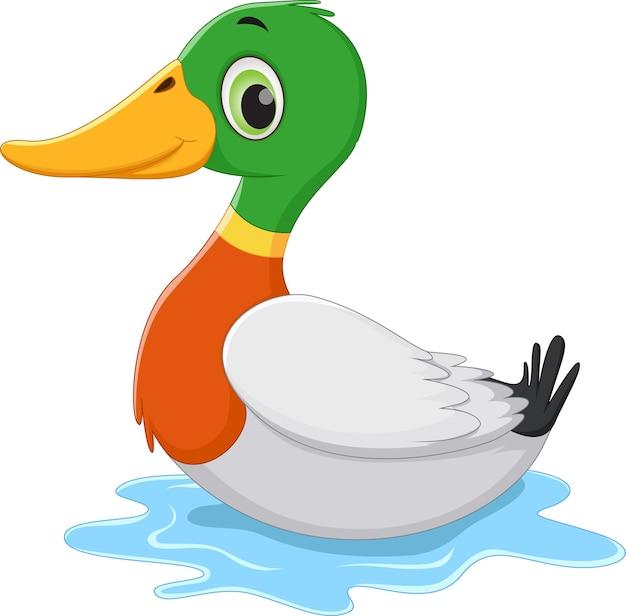 Divertido pato de dibujos animados nadando