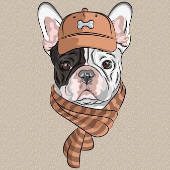 Divertidos dibujos animados hipster perro bulldog francés raza