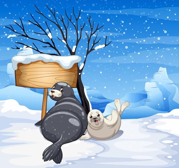 Dos focas en día nevado.