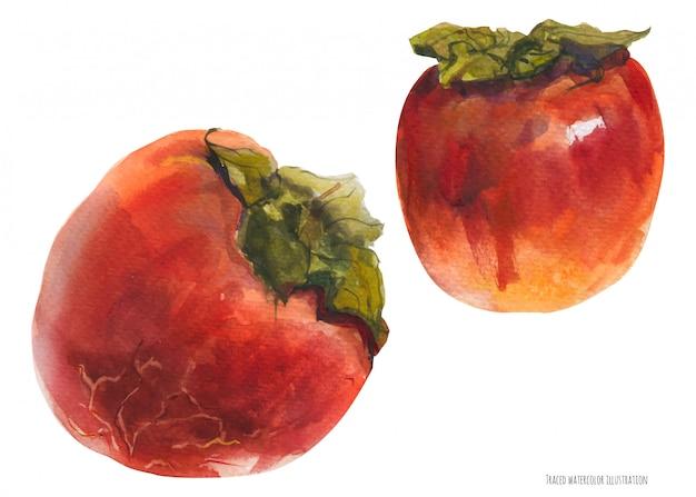 Dos frutos rojos de caqui