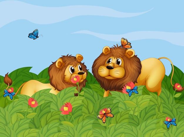 Dos leones en el jardín con mariposas.