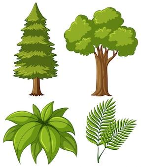 Dos tipos de árboles y dos tipos de hojas