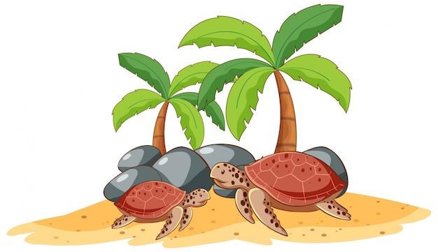 Dos tortugas marinas sobre fondo blanco.