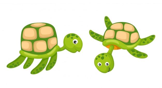 Dos tortugas vector