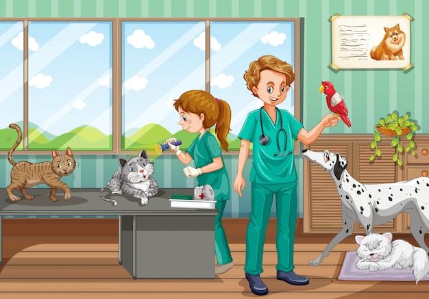 Dos veterinarios curando a muchas mascotas en la clínica.
