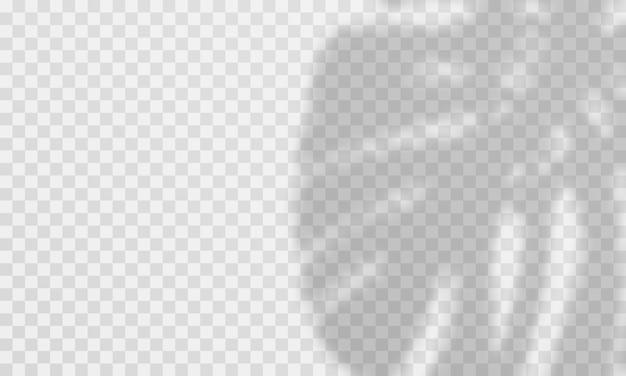 Efecto de superposición de sombras. superposición de hojas de palma transparente
