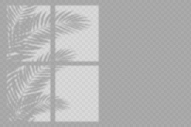 Efecto de superposición de sombras transparentes con hojas y ventana