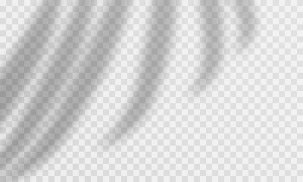 Efecto transparente de sombra de palma. superposición de hojas de palma transparente