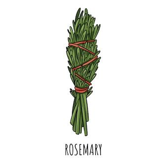 Ejemplo aislado garabato sabio del palillo de la mancha sabia. paquete de hierbas de romero
