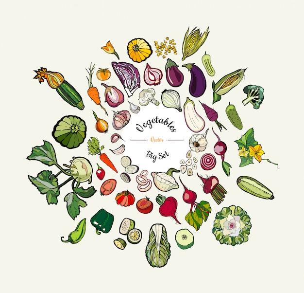 Ejemplo dibujado mano aislado vegetal. vector conjunto grande de verduras de colores dibujados a mano hipster para cartel vegetariano