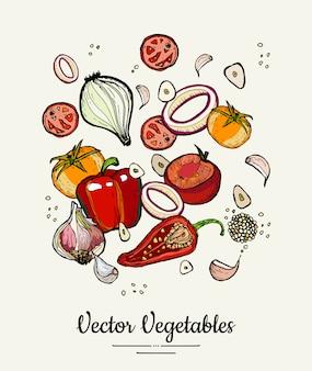 Ejemplo dibujado mano aislado vegetal. vector dibujado a mano hipster coloreado de verduras para el cartel vegetariano