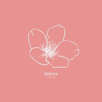 Ejemplo dibujado mano linda de la flor de sakura.