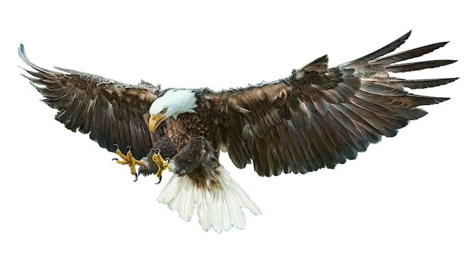Águila   Descarga fotos premium