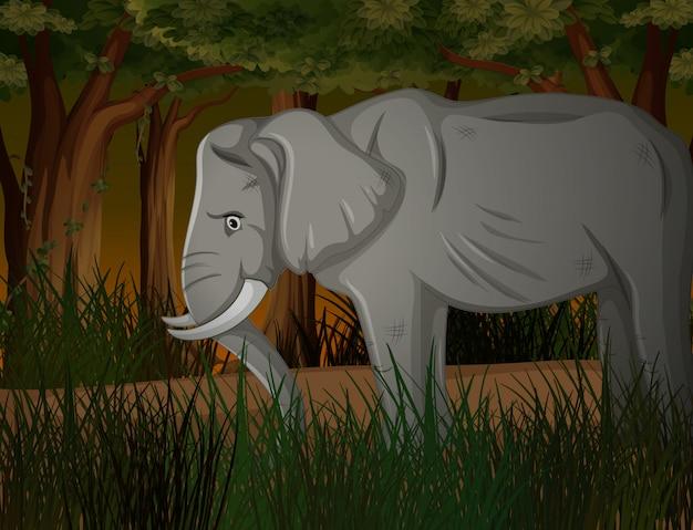 Elefante flaco en bosque oscuro