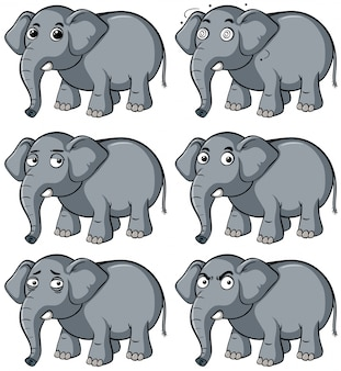 Elefante salvaje con diferentes expresiones faciales