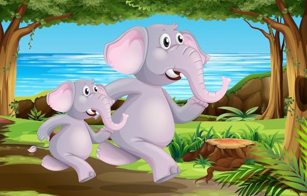 Elefantes en escena de la naturaleza