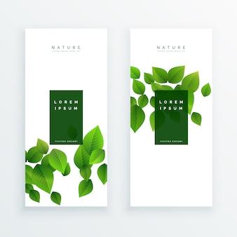 Elegante pancarta blanca con hojas verdes
