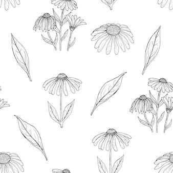 Elegante patrón sin costuras botánico con flores de equinácea de contorno, tallos y hojas en blanco