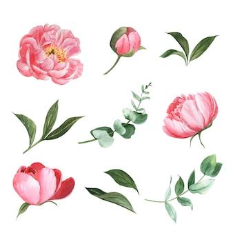 Elemento de diseño conjunto de varias flores acuarela