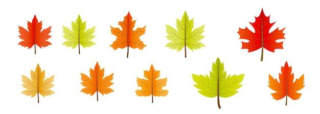 Elemento de hojas de arce otoñal