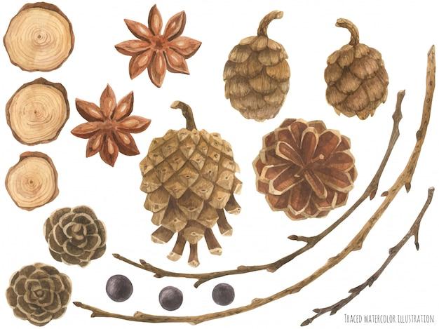 Elementos del bosque seco para el diseño de la naturaleza.