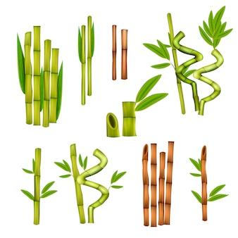 Elementos decorativos de bambú verde