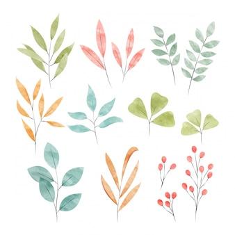 Elementos decorativos florales de acuarela.