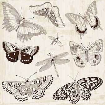 Elementos de diseño de mariposa caligráfica
