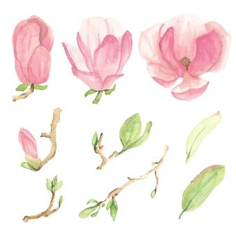 Elementos de flor y rama de magnolia floreciente rosa acuarela