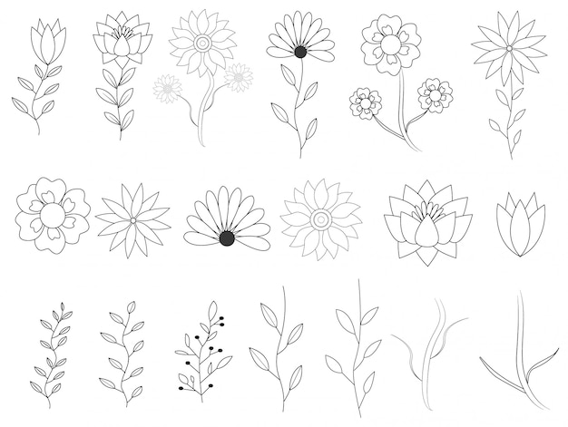 Elementos florales dibujados a mano con colección de hojas
