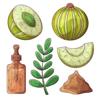 Elementos de fruta de amla de diseño plano orgánico