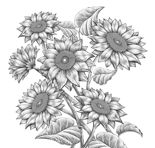Elementos de girasol retro, girasoles atractivos en estilo de sombreado grabado, tono blanco y negro