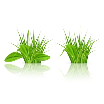 Elementos de hierba verde para y decorar. ilustración sobre fondo blanco