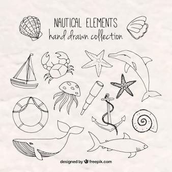 Elementos marinos dibujados a mano