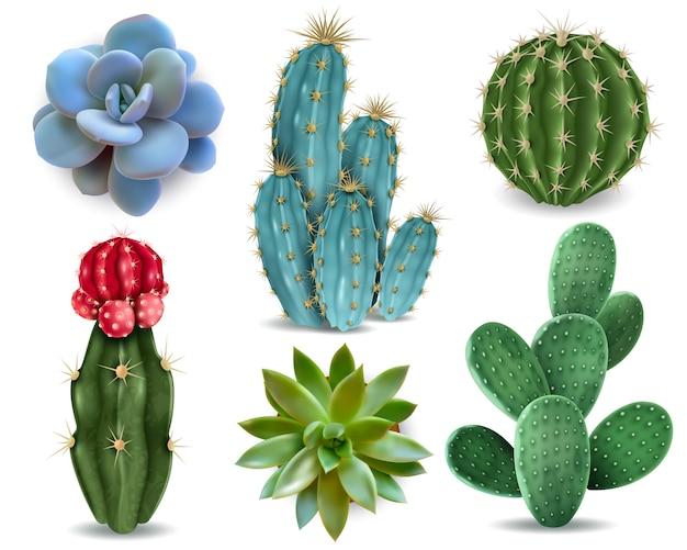 Elementos populares de plantas de interior y variedades de rosetas suculentas, incluida la colección realista de pin cushion cactus colección realista vector