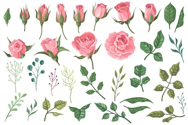 Elementos de rosa. capullos de flores de color rosa, rosas con ramos de hojas verdes, decoración de boda romántica floral para tarjetas de felicitación vintage. conjunto