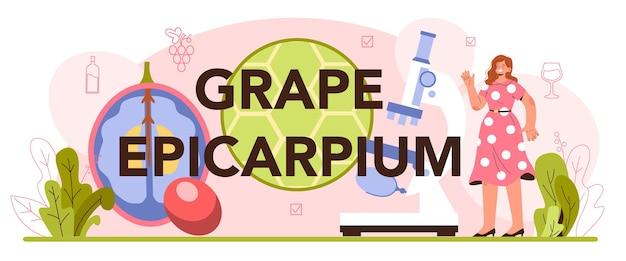 Encabezado tipográfico de epicarpio de uva. producción de vino. vino de uva