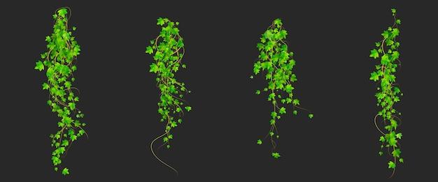 Enredaderas de hiedra con hojas verdes de planta enredadera, elementos de diseño decorativo botánico aislados sobre fondo negro.