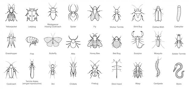 Error de icono de conjunto de línea de insectos. ilustración escarabajo insecto. icono de línea aislada error y mosca escarabajo.