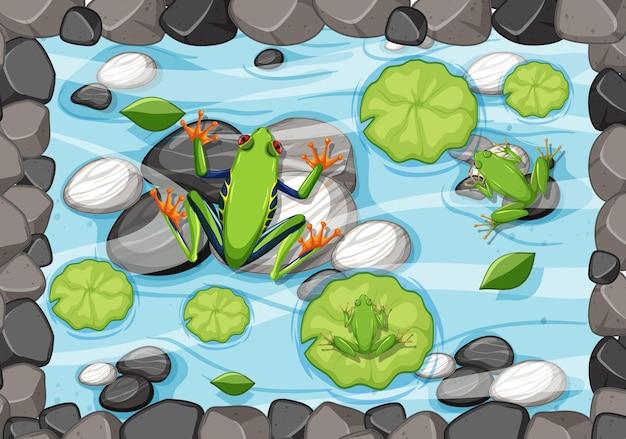 Escena aérea con ranas y hojas de loto en el estanque.