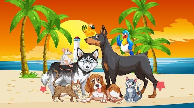 Escena al aire libre en la playa al atardecer con un grupo de mascotas