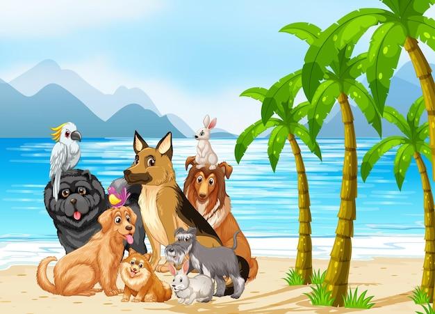 Escena al aire libre en la playa con grupo de mascotas.