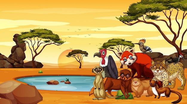 Escena con animales salvajes en campo de sabana