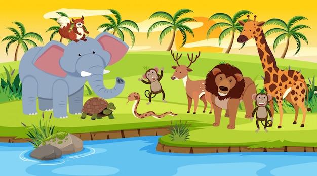 Escena con animales salvajes de pie junto al río al atardecer