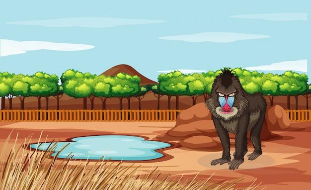 Escena con babuino en el zoológico