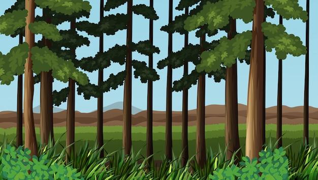 Escena del bosque con arboles y campo.