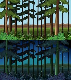 Escena del bosque durante el día y la noche.